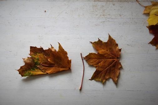 Blätterkrone1