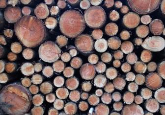 Holzstapel1