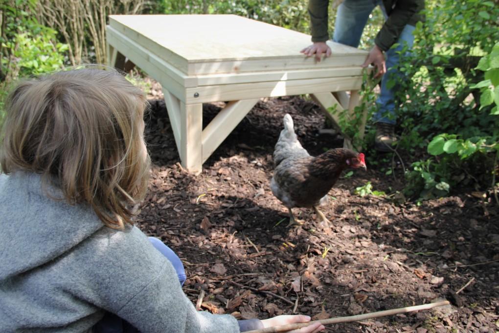 hühnerstallaufbau1