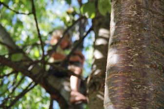 aufdembaum1